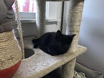 Adopt A Pet :: Nitro  - Bluefield, WV