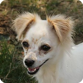 Spaniel (Unknown Type) Mix Dog for adoption in Coachella, California - Trudy