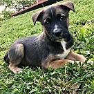 Adopt A Pet :: Kepler RBF