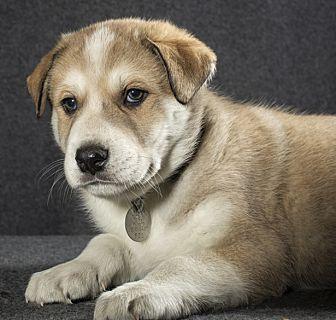 Adopt A Pet :: Sherman  - Saint Paul, MN
