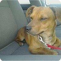 Adopt A Pet :: Billy - Tucson, AZ