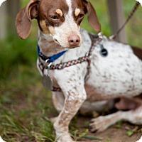 Adopt A Pet :: Olliver - La Crosse, WI