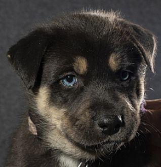 Adopt A Pet :: Murphy  - Saint Paul, MN