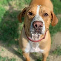 Puppies for Sale in Medford Oregon - Adoptapet com
