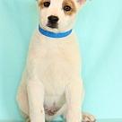 Adopt A Pet :: Zemo