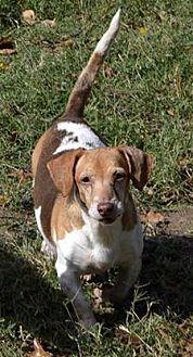 Adopt A Pet :: Quinn  - Aurora, CO