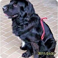 Adopt A Pet :: RUFUS - Houston, TX