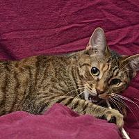 Adopt A Pet :: Fiona - Chattanooga, TN