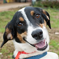 Adopt A Pet :: Sydney - Tanner, AL