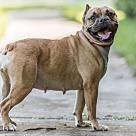 Adopt A Pet :: Georgia