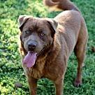 Adopt A Pet :: RANGOR