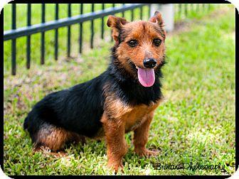 Dog Adoption Houston