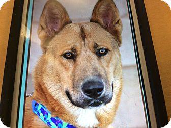 German Shepherd Dog Mix Puppy for adoption in Los Angeles, California - LEE VON CLEEF