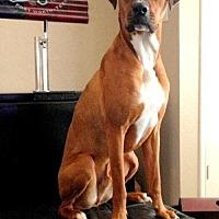 Adopt A Pet :: Mumford - Denton, TX