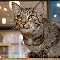 Adopt A Pet :: Grizzlor - St. Louis, MO
