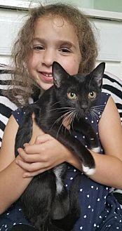 Adopt A Pet :: Kassie  - Devon, PA