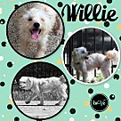 Adopt A Pet :: Rosie and Willie