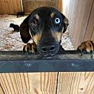 Adopt A Pet :: Serena (Has Application)