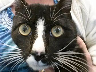 Adopt A Pet :: Blaze  - Waxhaw, NC