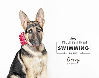 Adopt A Pet :: Gerzy  - Houston, TX