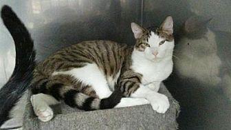 Adopt A Pet :: Reagan 2  - Mt Vernon, IN