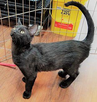 Adopt A Pet :: Bonkers  - Devon, PA