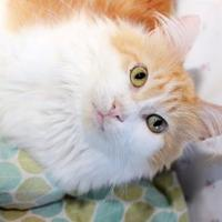 Adopt A Pet :: Gary - New Freedom, PA