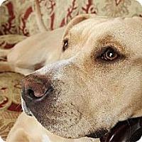 Adopt A Pet :: Norma Rose 'ROSIE' - Whites Creek, TN