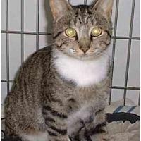 Adopt A Pet :: Mac - Stuarts Draft, VA