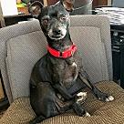 Adopt A Pet :: Alfredo Texas