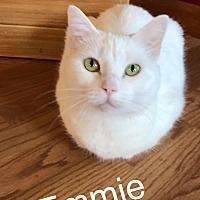Adopt A Pet :: Emmie MKK - Washington, DC