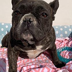 Buckeye Bulldog Rescue In Columbus Ohio