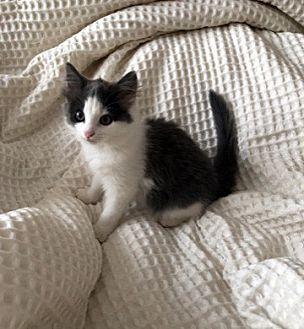 Adopt A Pet :: Gracie  - Concord, NC