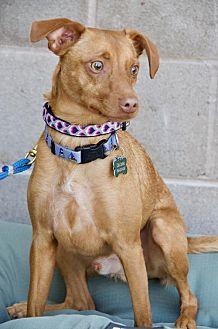 Adopt A Pet :: Tacoma  - Santa Clara, CA