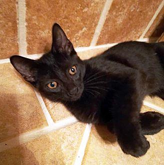 Adopt A Pet :: Noah  - Troy, MI