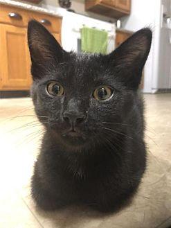Adopt A Pet :: Bear - Ohio  - Liberty, NC