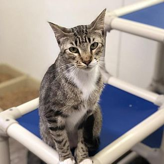 Adopt A Pet :: Mac  - Lucedale, MS