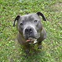 Adopt A Pet :: Zion - Reisterstown, MD