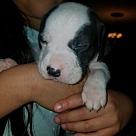 Adopt A Pet :: Poppy's Pup Buddy