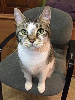 Adopt A Pet :: Willy  - Blasdell, NY