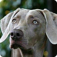 Adopt A Pet :: William - Long Beach, CA