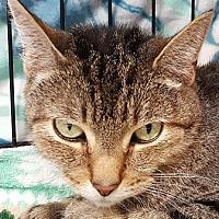 Adopt A Pet :: Bella - Walworth, NY