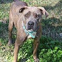 Adopt A Pet :: Blossom - Hankamer, TX