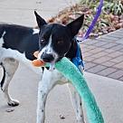 Adopt A Pet :: Domino (a.k.a. Sparky)