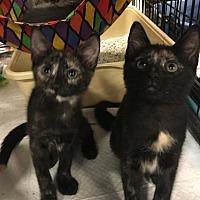 Adopt A Pet :: Sunny - Boynton Beach, FL