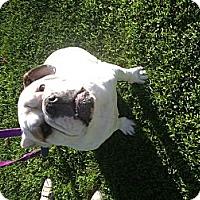 Adopt A Pet :: STEWIE - West Hills, CA