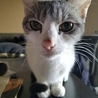Adopt A Pet :: SAMANTHA - Kyle, TX