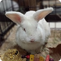 Adopt A Pet :: Romeo - Williston, FL
