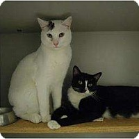 Adopt A Pet :: Fluffy - New York, NY