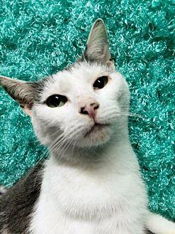Petsmart Framingham Adopt A Cat
